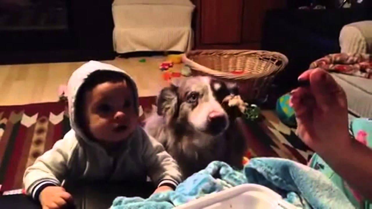 """Perro dice """"mamá"""" antes que un bebé"""