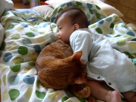 「[ネコ]優しく包む包容力で赤ちゃんを見事「猫枕」の世界へいざなう。」のイメージ
