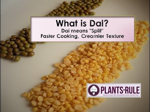 What Is Dal? Faster Cooking Tips, Creamier Texture, And Definition