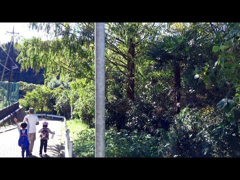 横浜の未来へ。「瀬上沢」の緑を、残そう。~Save SEGAMI~横浜最後の大自然を巡る