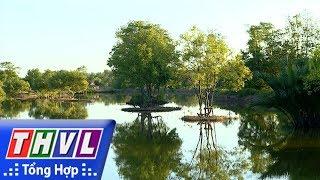 Nhịp sống Trà Vinh: Rừng đước sinh thái vùng duyên hải