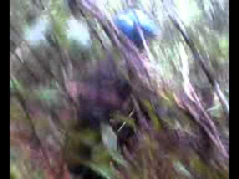 Mesum anak Smp Di Hutan