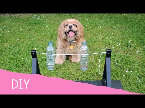 DIY Doggy Projects - Spin The Bottle Dog Toy