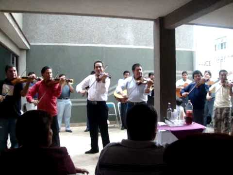 Mariachi Paulino -  Violin solo played by Alvaro Paulino Jr. (Orange Blossom Special)