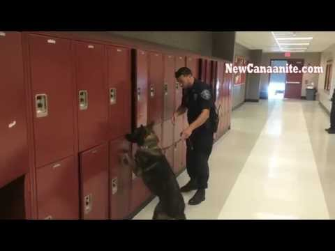New Canaan Police K 9 Apollo at NCHS