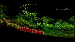 Video Huge Aquascape Tutorial Step by Step- Spontaneity by James Findley for The Green Machine MP3, 3GP, MP4, WEBM, AVI, FLV Agustus 2019