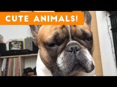 Cutest Pets of the Week Compilation November 2017   Funny Pet Videos