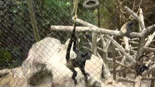30 Sep 2012 ... zoologico. israel chinchilla ... 5 Momentos Increibles Captados en el Zoologico! - nDuration: ... Zoologico Serie Cubana Estreno Cap #19 y #20.