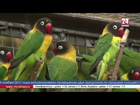 В парке имени Гагарина появились экзотические птицы - попугаи-неразлучники
