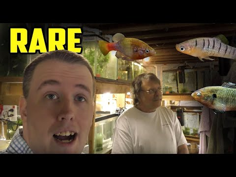 Rarest Livebearer Fish Room Tour! Green Dragon Plecos. SelectAquatics.com
