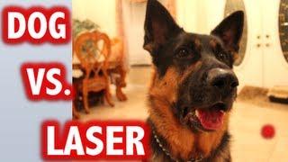 Dogs vs Laser Compilation