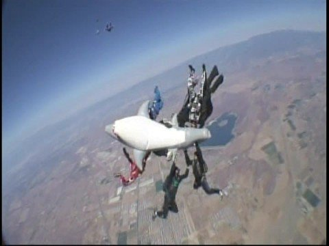 Skydiving with a shark