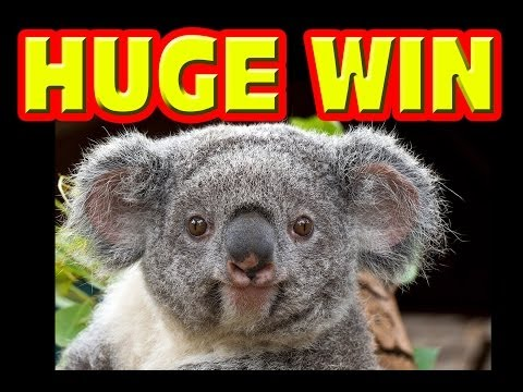 Koala Kash HUGE PROGRESSIVE WIN Las Vegas Slot Machine Big Winner