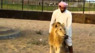 Ride The Lion - Crazy Arab Guy