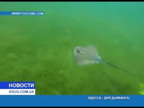 Тайны подводной Одессы: на многое не рассчитывали