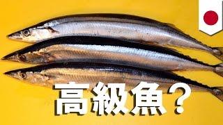 サンマ大不漁…1匹で3000円も(ニュース)