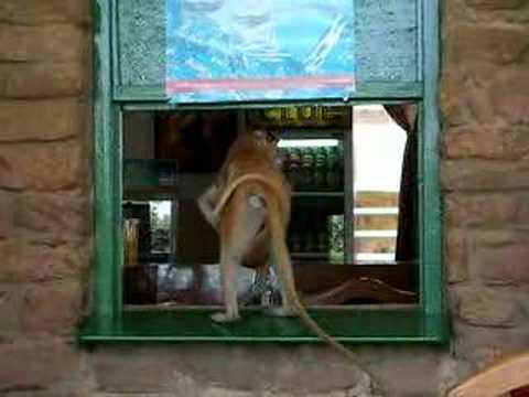 Monkey at the Bar