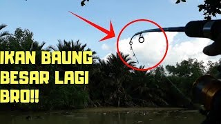 Video umpan kucur!! mancing ikan baung (catfish) part 9 MP3, 3GP, MP4, WEBM, AVI, FLV November 2018