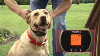 Video Motorola Wireless Dog Fence MP3, 3GP, MP4, WEBM, AVI, FLV Mei 2017