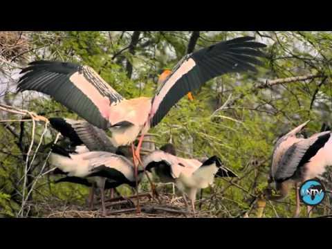 Изменение климата угрожает птицам Индии