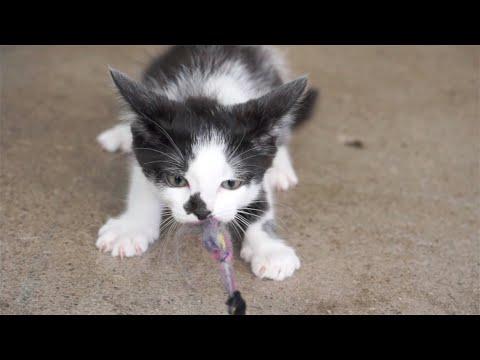 Kitten tug of war