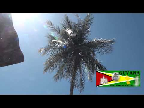 Berbice - Buck Boy climbing coconut tree-Belvedere ,Berbice. Guyana folk songs.