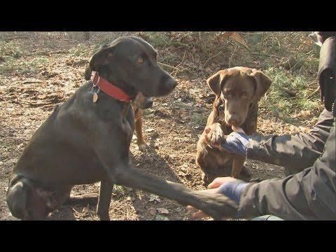 Hundefutter Test - 30 Nassfutter | Stiftung Warent ...