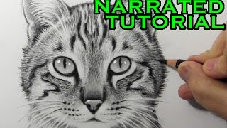 Video How to Draw a Cat [Narrated Step-by-Step Tutorial] MP3, 3GP, MP4, WEBM, AVI, FLV Desember 2018