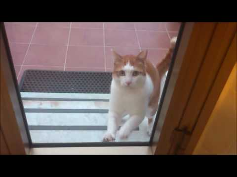 A Stray Cat Keeps Poking At The Door