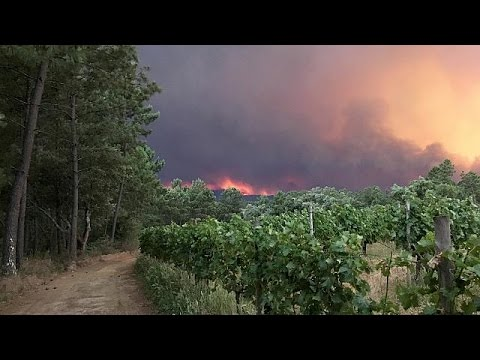 Devastating forest fire kills more than 40 in central Portugal