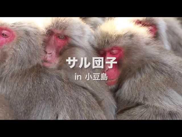 サル団子 in 小豆島
