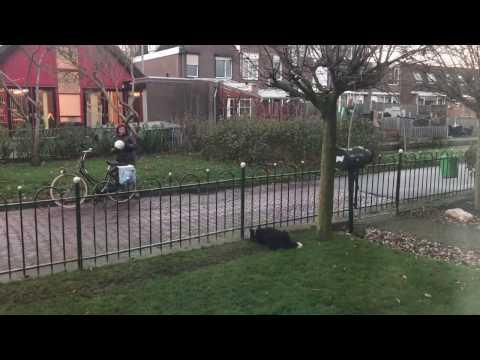 Pies tak bardzo nudził się sam na podwórku, że wymyślił genialną zabawę – To trzeba zobaczyć!