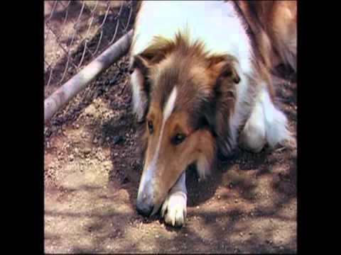 Lassie Come Home - Original Theatrical Trailer