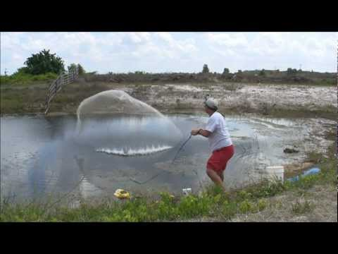 GOLDEN SHINER GOLD MINE – THROWING A BIG CAST NET FOR LIVE FISHING BAIT – HD