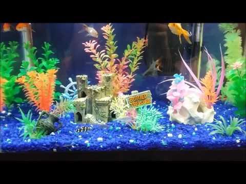 Freshwater Aquarium Design Ideas fresh water aquarium designs for bedrooms Happy Fish At Play Freshwater Aquarium Design Ideas 10 Gallon Led