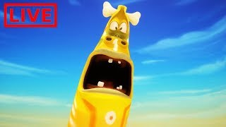 Video 🔴 LIVE LARVA | GIANT LARVA | BEST OF LARVA | Cartoon Movie | Cartoons For Children | LARVA Official MP3, 3GP, MP4, WEBM, AVI, FLV November 2018