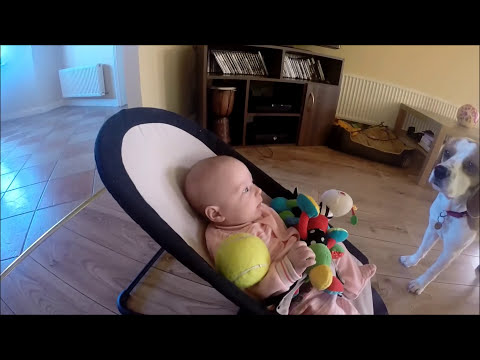 toys - Here is some short video from that day, to proof people we don't force him to do what he is doing, it wasn't planned. I just wanted to record my Laura and Charlie how they play fetch for a...