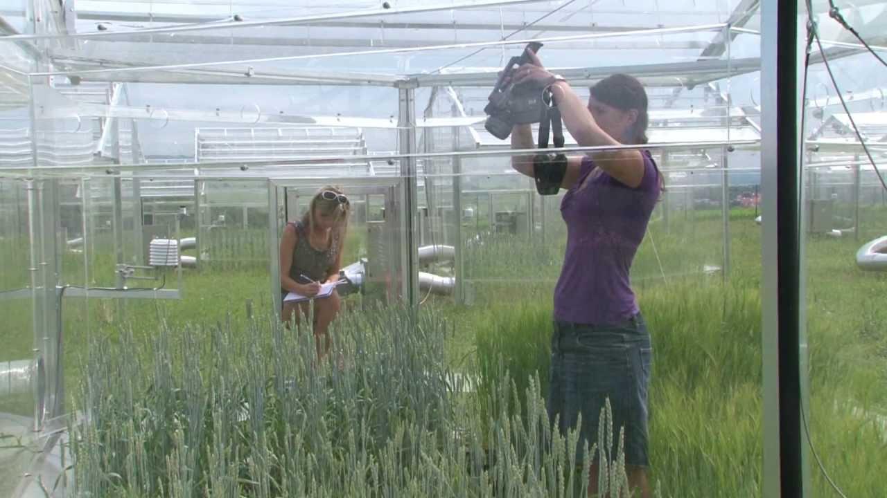 Unikátní experiment s rostlinami