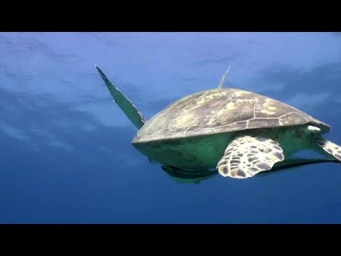 WWF: Χάσαμε το 60% του πληθυσμού των άγριων ζώων μέσα σε 40 χρόνια…