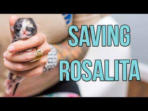 Saving a One-Day-Old Kitten, Rosalita!