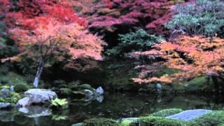 Kameyama-shi Japan  city pictures gallery : Nanzenin: The Garden of Emperor Kameyama!