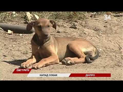 В Днепре возле гастроинститута на женщину напали собаки