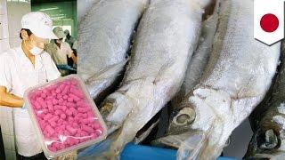 輸入シシャモから汚物や殺鼠剤(ニュース)
