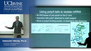 Intro To Chemical Biology 128. Lecture 09: RNA Part 2