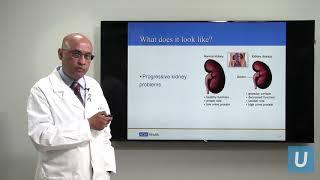 Video Kidney Disease: What You Should Know | UCLAMDCHAT Webinars MP3, 3GP, MP4, WEBM, AVI, FLV Agustus 2019