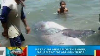 Cagayan De Oro Philippines  city photos : BP: Patay na megamouth shark, nalambat ng mangingisda sa Cagayan de Oro City