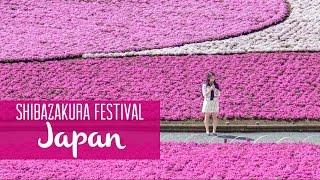 Chichibu Japan  City new picture : Shibazakura Festival in Chichibu, Japan