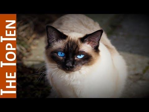 i 10 gatti più belli del mondo!