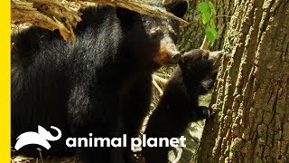 Parenting in the Animal World | Animal Bites with Dave Salmoni by Animal Planet