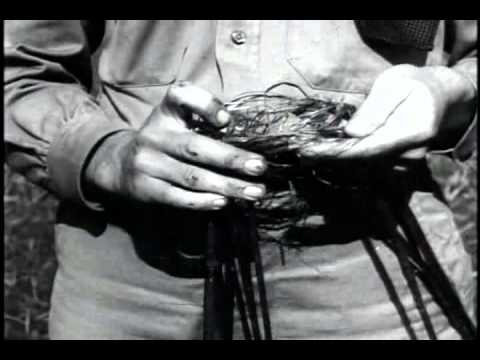 Hemp for Victory (1942) - US Government educational doc on the great uses for hemp and the relationship the US once had with the natural fibre.
